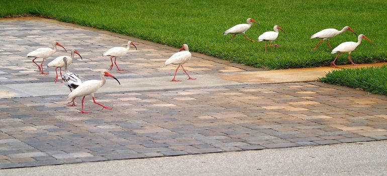 Bird walking down florida