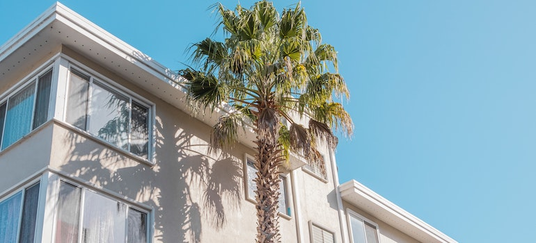 a large palm tree