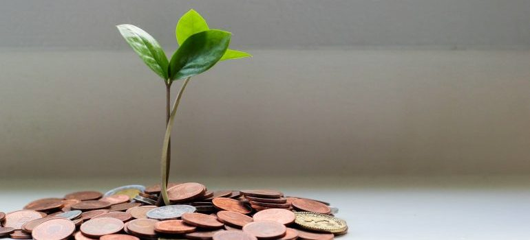 Green plant on the brown coins